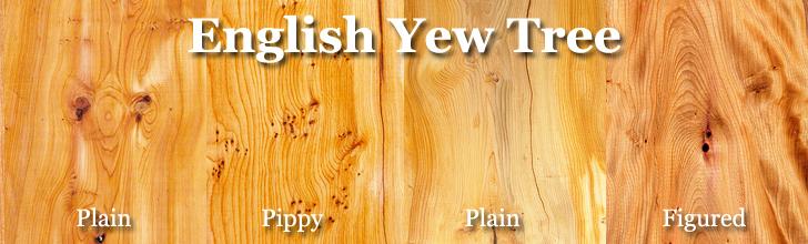english yew tree